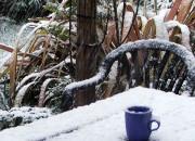 snow-blue-cup
